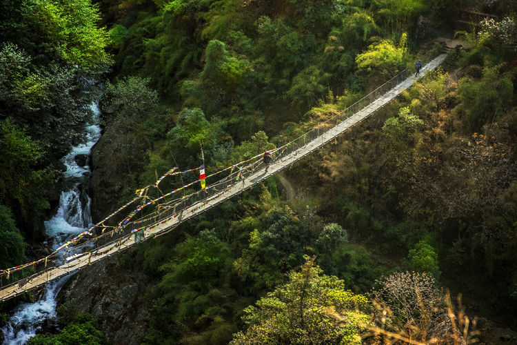 Man Walking On Footbridge Over Trees In Forest