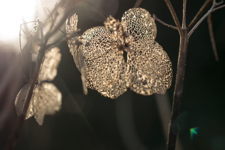 Bokeh Bokeh Photography Close Up Close-up Day Dried Plant Flower Flower Head Focus On Foreground Fragility Morning Light Nature New Year No People Outdoors Plant Wilted Plant
