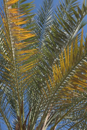 Natural Pattern No People Day Low Angle View Full Frame Growth Backgrounds Plant Tree Nature Pattern Beauty In Nature Outdoors Green Color Palm Tree Sunlight Sky Leaf Palm Leaf Tranquility Plant Part