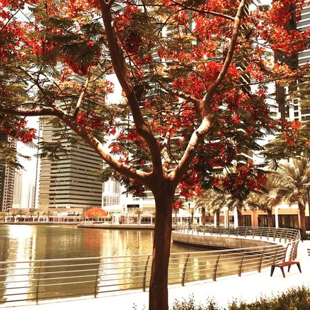 The trees and their flowers at Jumeirah Lakes Towers.(null).. JLT Summer ☀ Heat Flowers