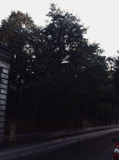 Tree Road No