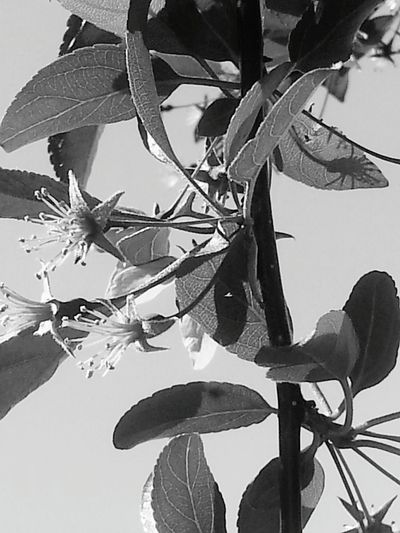 Black And White Trees Spring Blossoms Nature Nature Is Beautiful