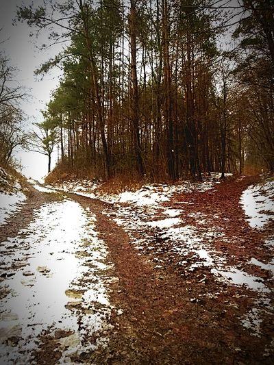 Deutschland Retzstadt Germany Hanging Out Taking Photos Wandern Hiking Fork