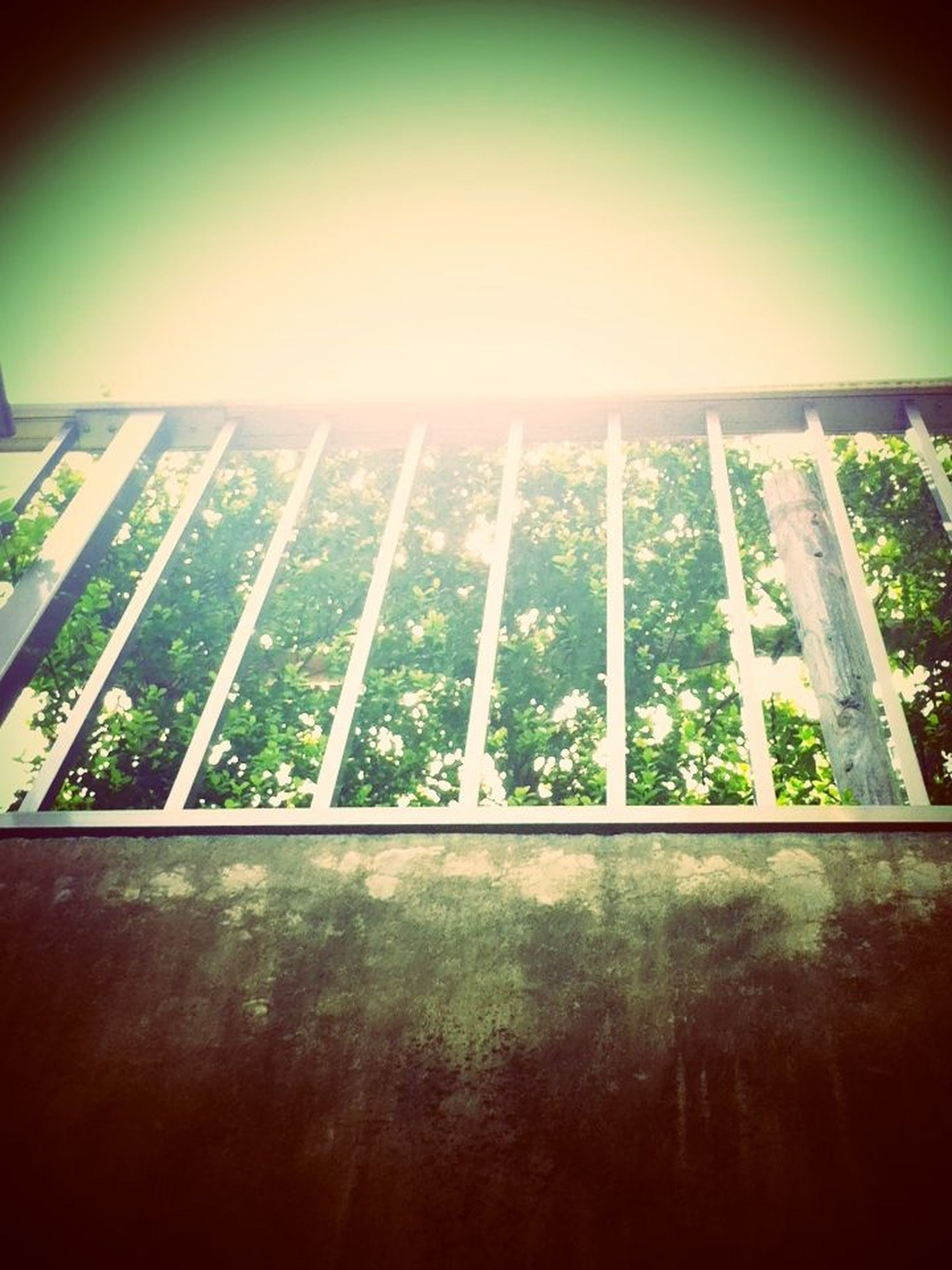 indoors, built structure, sunlight, low angle view, architecture, auto post production filter, day, no people, sky, clear sky, nature, window, shadow, growth, wall - building feature, pattern, transfer print, close-up