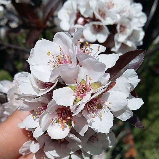 Fotografiando Flowers Beautifulnature