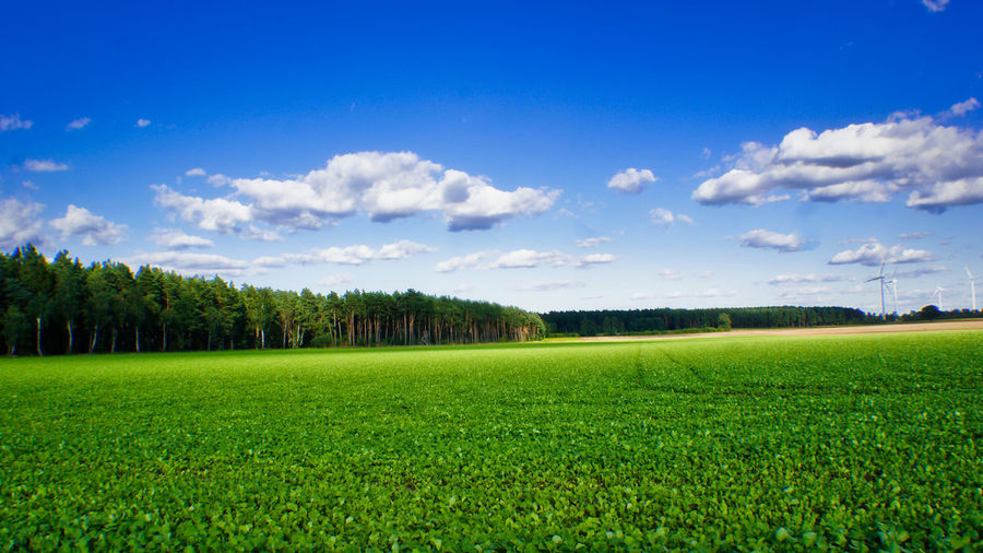 Backgrounds Background Copy Space Springtime Spring Plant Green Color Field Landscape Sky Environment Grass Tranquil Scene Land Tranquility Cloud - Sky Beauty In Nature Agriculture Rural Scene Scenics - Nature Nature Tree Growth No People Day Outdoors