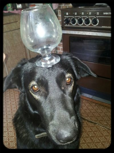 собака официант