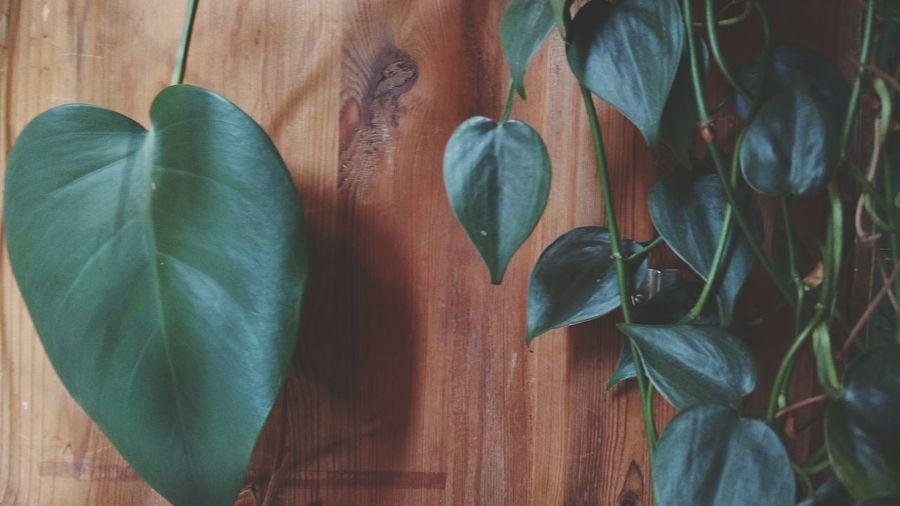 Leafes Hanging