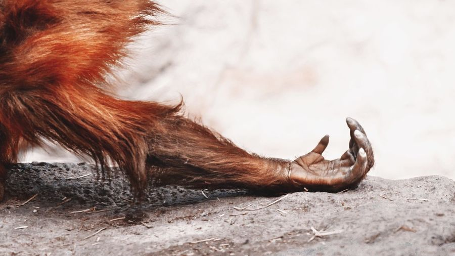 - GIVE ME THE XMAS GIFT! P R O N T O - Monkey Arm Hand Hairy  Animals Taking Photos Wildlife Nature's Diversities Colour Of Life