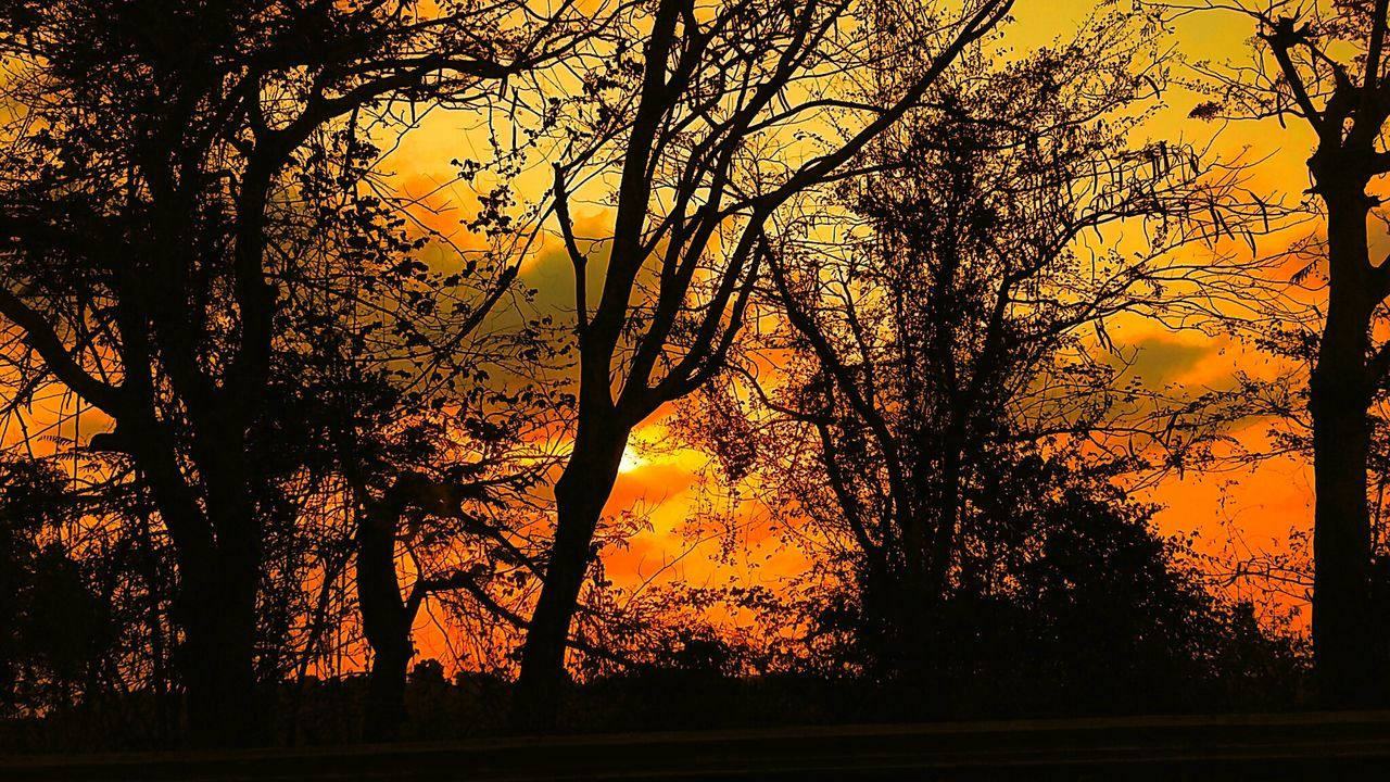 tree, sunset, silhouette, nature, tranquil scene, beauty in nature, orange color, scenics, tranquility, no people, tree trunk, sky, outdoors, growth, branch, forest, yellow, landscape, day