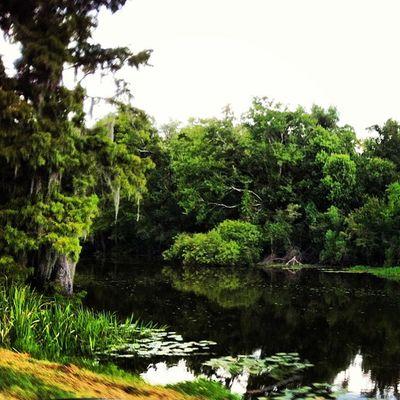 Louisiana Bayou Swamp Rsa_nature Nexus_nation Trailblazers_rural Deepsouth Oldsouth Onlylouisiana Louisianatravel