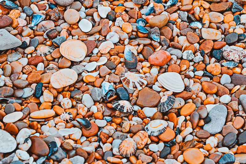Full frame of pebbles and shells texture
