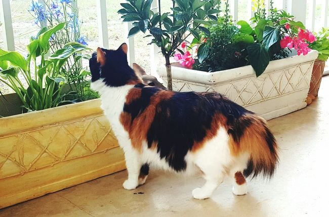 Always stop and smell the flowers Calico Cat And Flower Calicocat