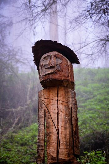 The wooden man in Sutro Forest. Urban Nature San Francisco Portrait Fog Hiking