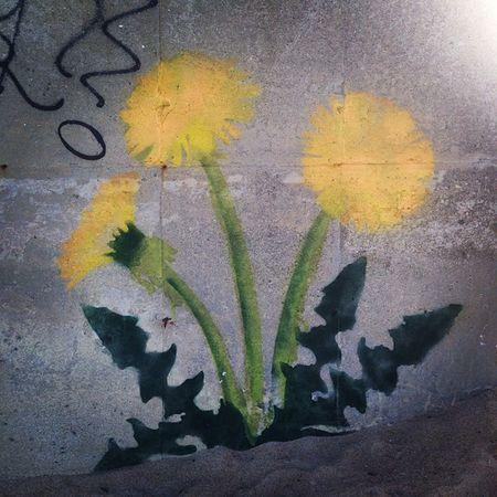 Graffiti Dandelions Sick Flowers