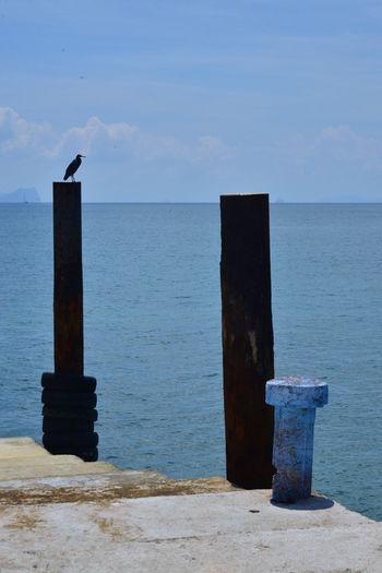 Silhouette Andaman Sea Bird Nature Outdoors Sea Sea View Sea And Sky Island And Sea Beauty Of The Sea Sea Photography Beauty Of Sea Sea Colours Sea_collection Sea Blue Sea And Blue Sky
