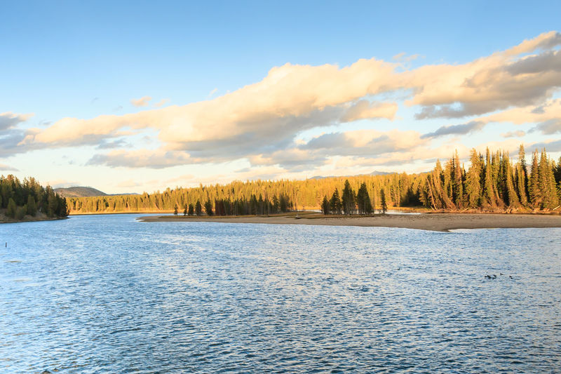 Yellowstone River Beauty In Nature Cloud - Sky Day Evening Light Fir Trees Forest Lake Landscape Mountain Nature No People Outdoors Pine Woodland River Scenics Sky Sunset Tranquility Tree Water Wilderness WoodLand Wyoming Yellowstone River