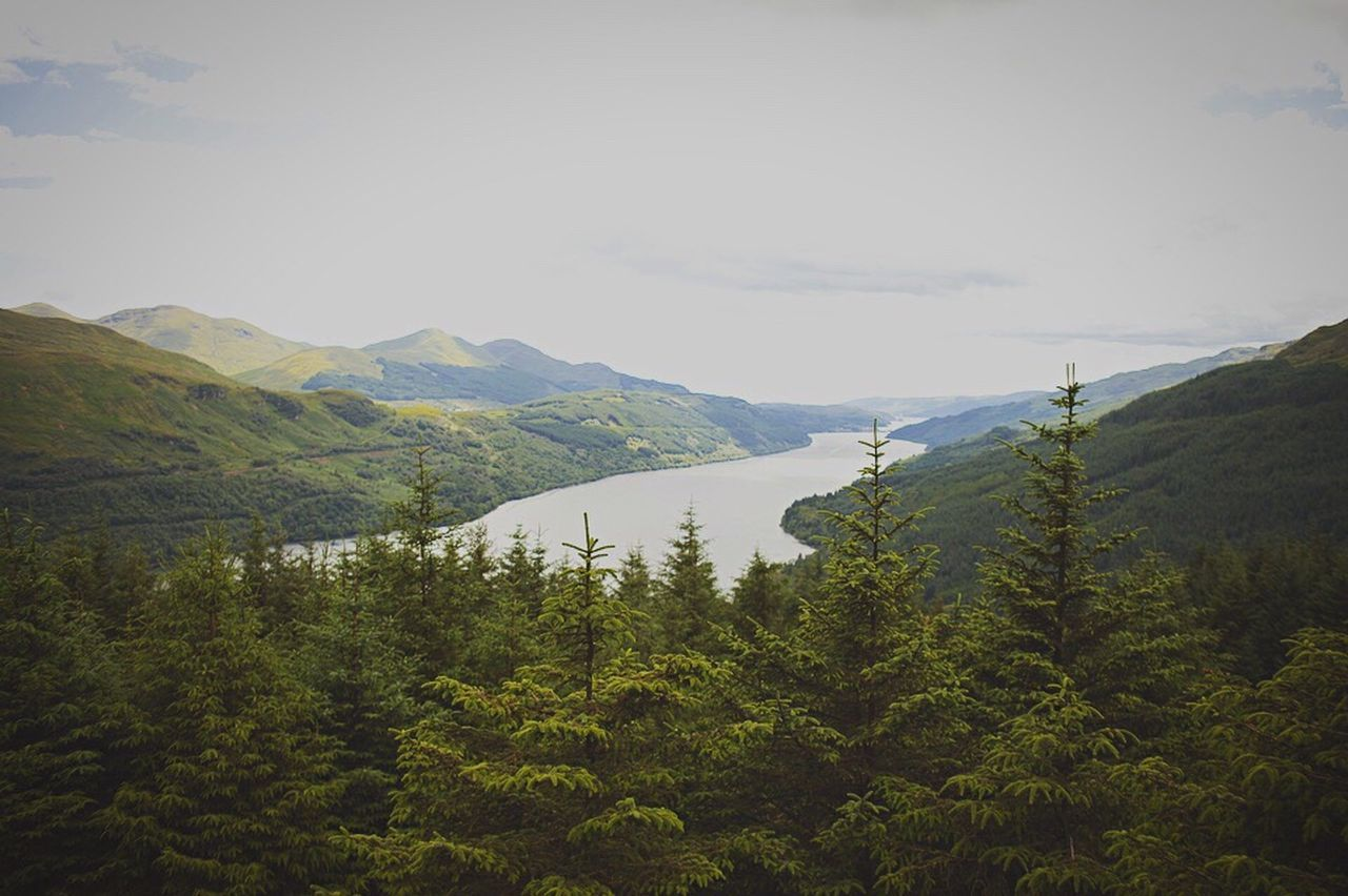 mountain, tree, nature, beauty in nature, scenics, tranquility, day, tranquil scene, forest, no people, sky, pine tree, mountain range, outdoors