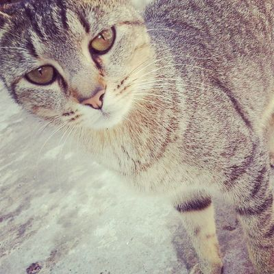 Mmm bba mmm Reina Tigresa Cat Photo Instagrameando Antopiola Bye