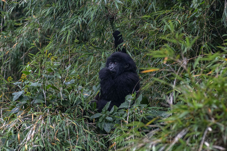 Black cat on land
