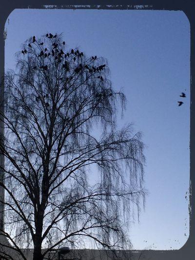 Birds Flying Tranemo