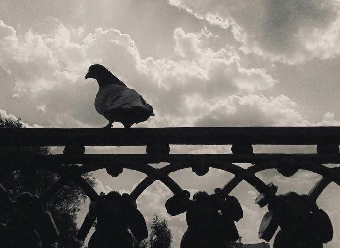 Silhouette bird perching on railing against sky