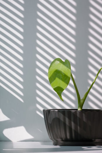 Close-up of small potted plant on window