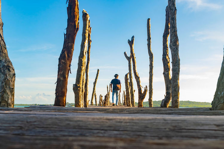 Copy Space Wooden Jetty Wood - Material Perspective Adventure Bridge - Man Made Structure Day Nature Outdoors Sportsman Headwear Technology Full Length Men Hardhat  Mid Adult Men Mid Adult Sky Tree Trunk Hiker Horizon Over Water Shore Woods Plant Bark Branch Fallen Tree Calm Ocean Outline