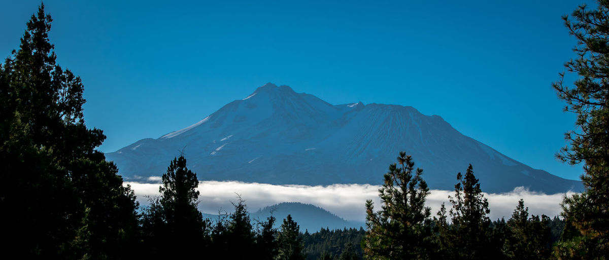 Mountain Over Cloud Beauty In Nature Blue Clear Sky Day Growth Majestic Mountain Mountain Peak Mountain Range Nature No People Non-urban Scene Outdoors Physical Geography Pine Tree Remote Scenics Tourism Tranquil Scene Tranquility Travel Destinations Tree Vacations Wilderness WoodLand
