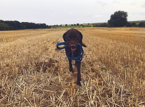 Field One Person Looking At Camera Front View Portrait Real People Standing Agriculture Day Sky Growth Landscape Grass Outdoors Nature Domestic Animals Lifestyles Tree Animal Themes Beauty In Nature Dog Dogs Of EyeEm Field