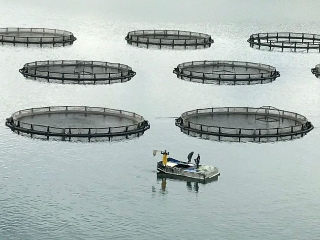 Fishfarm First Eyeem Photo