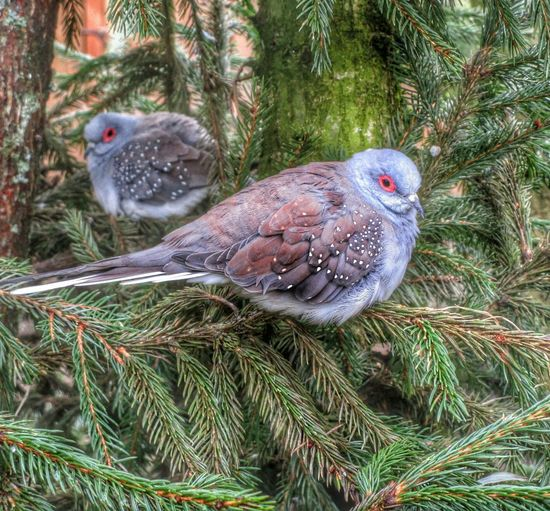 Animalposing Eyeemnaturelover ThingsWithWings  Lovelynatureshots Dove Taube Pigeon Duif Telephoto Closeup Colours