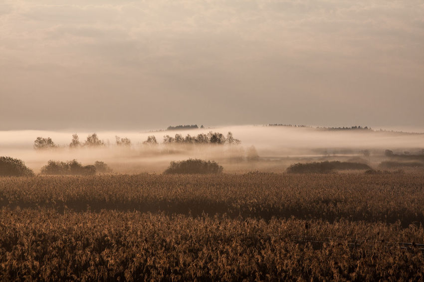 Federsee Agriculture Beauty In Nature Day Field Fog Growth Landscape Nature No People Outdoors Plant Rural Scene Scenics Sky Tranquil Scene Tranquility Tree