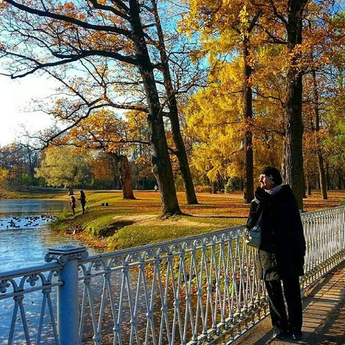 Autumn природароссии Питер Санкт-Петербург Saint Petersburg Saint-Petersburg Russia Saintpetersburg деревья Россия СанктПетербург Санкт_Петербург царское село Пушкин Tsarskoe Selo пейзаж Природа Landscape Nature Trees
