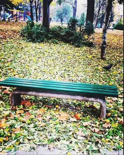 AndjelaMancic EyeEm Nature Lover First Eyeem Photo Nature Colours Fall Leaves Green Green Green!