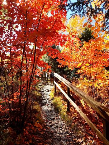 Indiansummer Canada Montréal Autumn Nature Forest Scenics Outdoors Tree Tranquility Walking