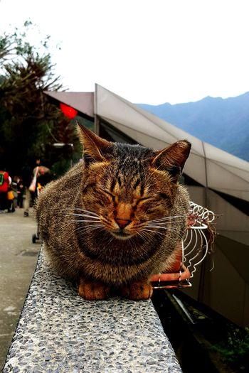 lined eyes cat Cat♡ People Watching Weekend 猴硐貓村 Traveling Animals Taking Photos EyeEm Best Shots Beautiful Day People Watching
