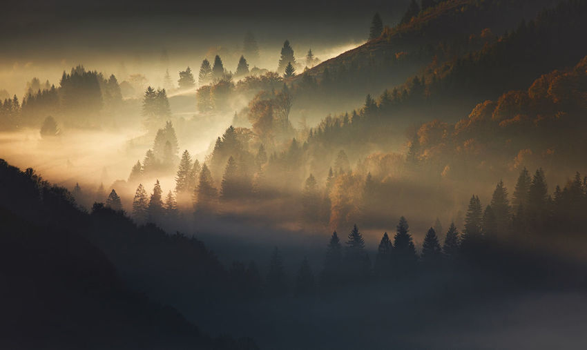 Scenic view of trees on mountain in foggy weather