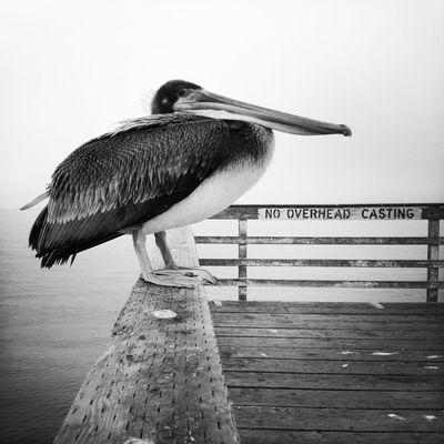 No Overhead Casting AMPt_community Oggl Pelican NEM Black&white