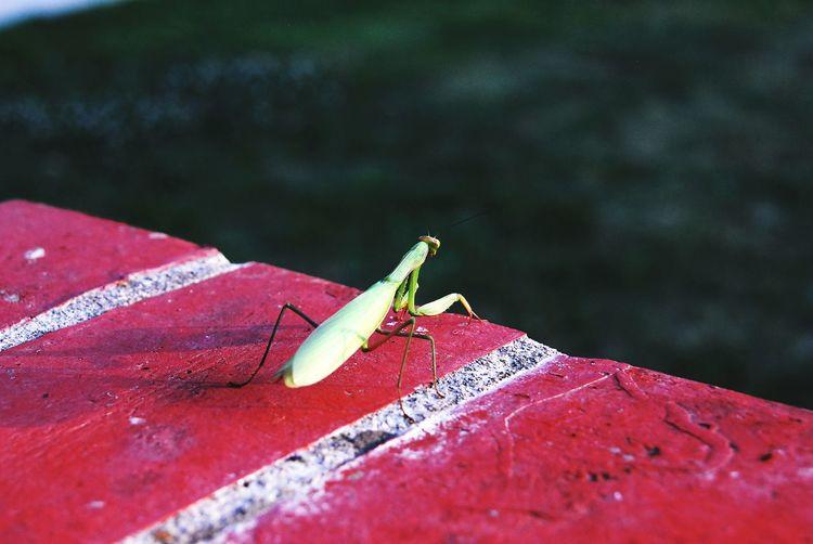 High angle view of praying mantis on retaining wall