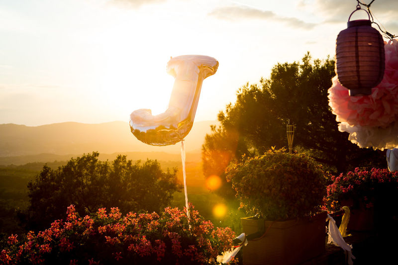 Backlight Celebration Nature Party Time Sunrays Yes Animal Themes Beauty In Nature Day Flamingo Flower Freshness Growth Hot Air Balloon Nature No People Outdoors Party Plant Sky Sunlight Sunset Tree Wedding Day Wedding Party