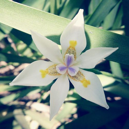 Little Flower :)