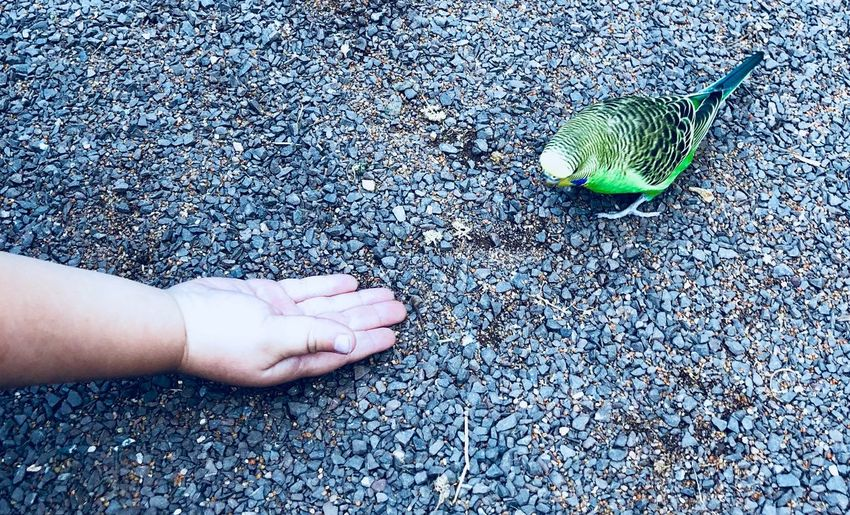 Close-up of hand reaching out bird