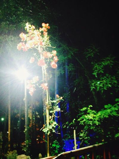 Flowers Beautiful Trees Shotsbyme🌲