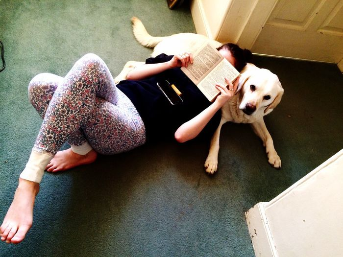 Daughterdearest Dog Labrador Yellow Lab Pillow Fluffy Reading A Book Reading & Relaxing Dogslife Relaxing Being Silly Patient Dog Dog Love Family