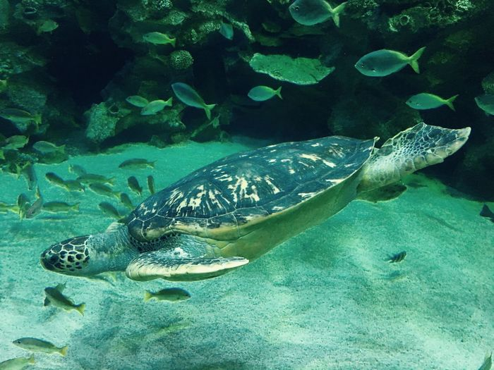 Aquaria Klcc Aquaria Aquarium