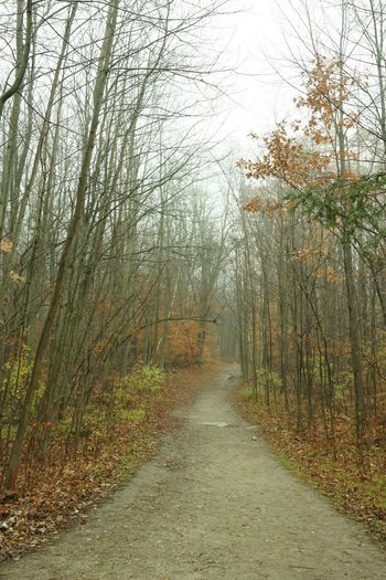 Rainy Late Autumn Day Tree Plant The Way Forward Direction Growth Nature No People Beauty In Nature Day Tranquility Diminishing Perspective Footpath Scenics - Nature Forest Tranquil Scene