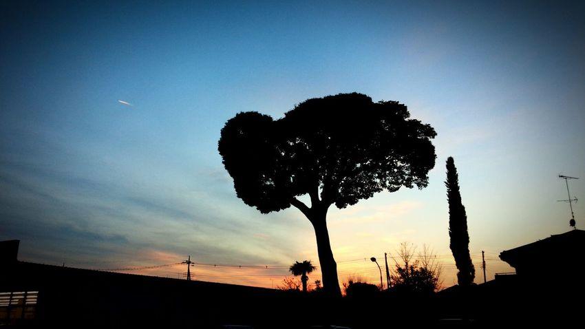 オウチヘカエロウ Clouds And Sky TreePorn Relaxing