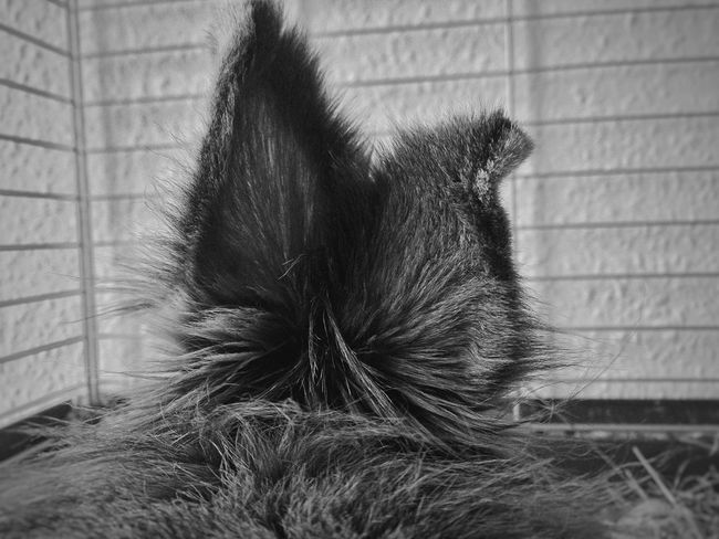 BrianArlt Indoors  Animal Themes No People Close-up One Animal Day Domestic Animals Nature Pets Black And White B&W Portrait Mobile Photography