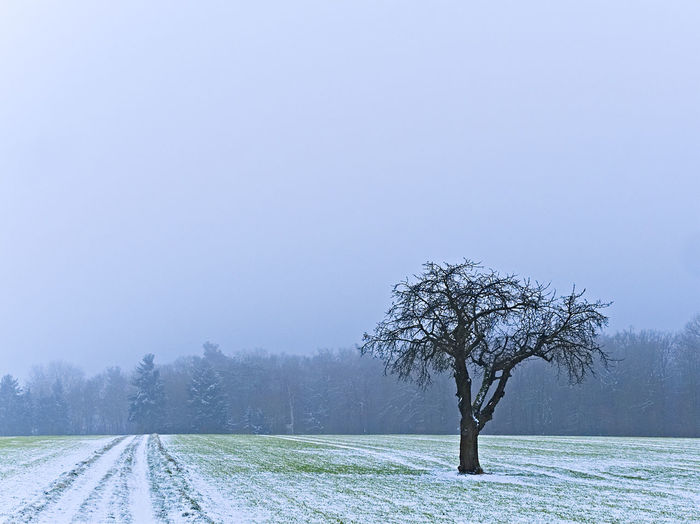 Winterimpressionen EyeEm Landscape Alte Bäume Bare Tree Beauty In Nature Branch Clear Sky Cold Temperature Day Field Landscape Nature No People Outdoors Scenics Sky Snow Tranquil Scene Tranquility Tree Tree Trunk Winter Winterlandschaft